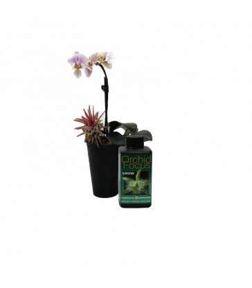GWT ORCHID FOCUS GROW 100ML